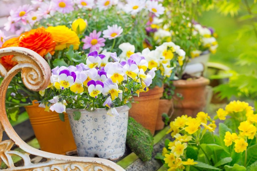 Wiosenne Kwiaty W Skrzynkach I Donicach