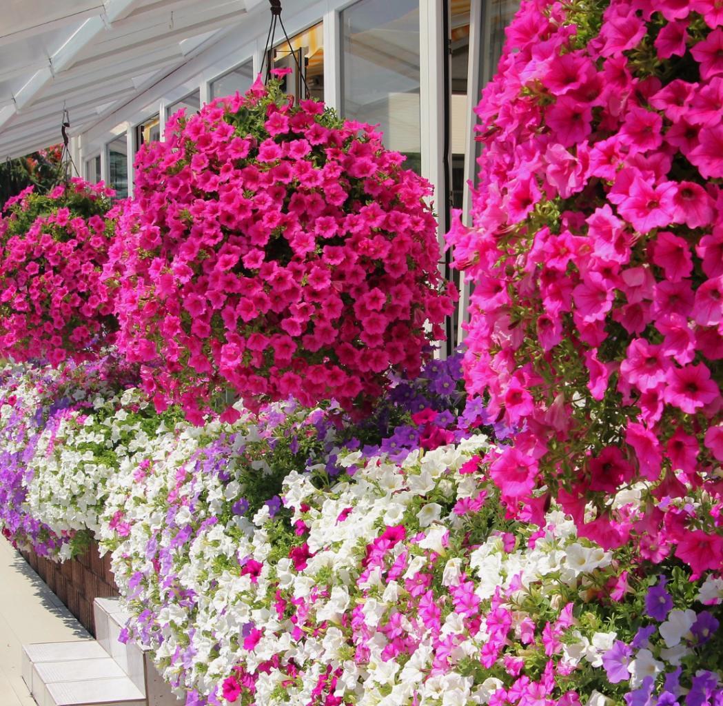 Kwiaty Kaskadowe Do Ogrodu